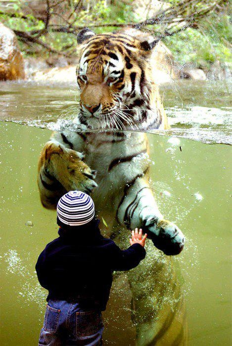 What does the child know? What does the tiger know? Reaching across the divide to place they share in common.