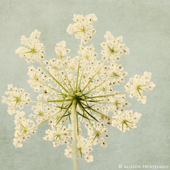Imprimir chique Arte Floral Arte em Aqua por RockyTopPrintShop