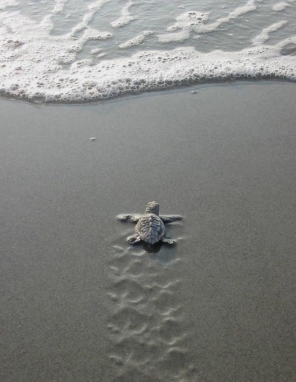 Kayla Giles: Sea turtle #Lockerz