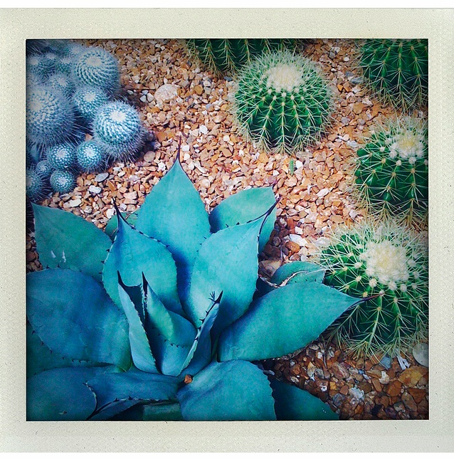 Cactus Garden in Blue & Green