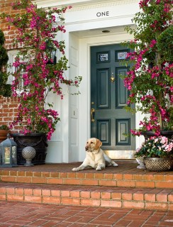Isn't this front door a dream? Except I would put a yorkie on the front porch. :)