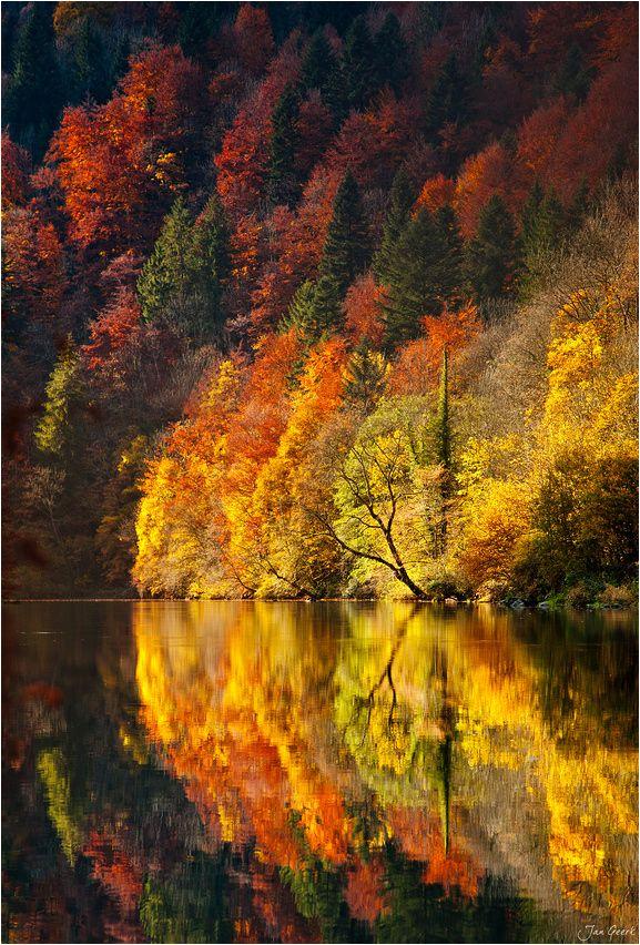 ✯ Fire in the Woods - Svizzera