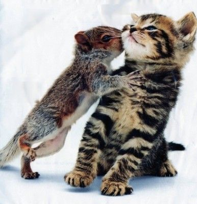 Odd couple: Squirrel and kitten ♥