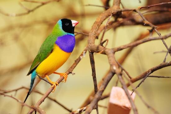 Mystery Bird of June 2013