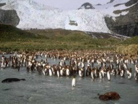 Antarktis: Eisberg bedroht Robben und Pinguine