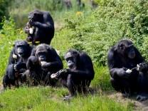Anthropologie: So ähnlich sind sich Affe und Mensch