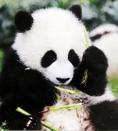 Photos of Chengdu Research Base Of Giant Panda Breeding, Chengdu