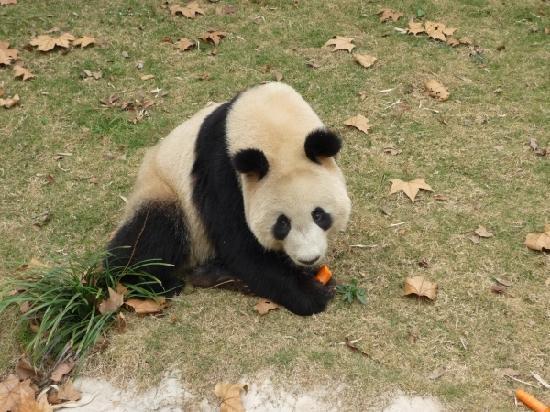 Pictures of Shanghai Wild Animal Park, Shanghai