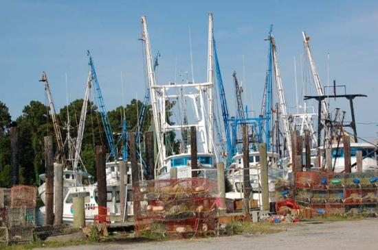Fishing Boats At Swan Quarter Harbor Picture Of The