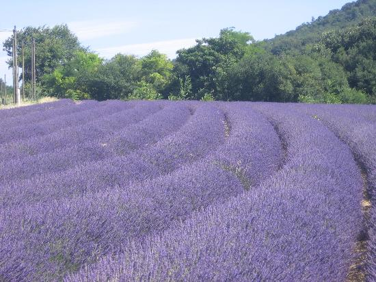 Provence-Alpes-Côte d'Azur: photos