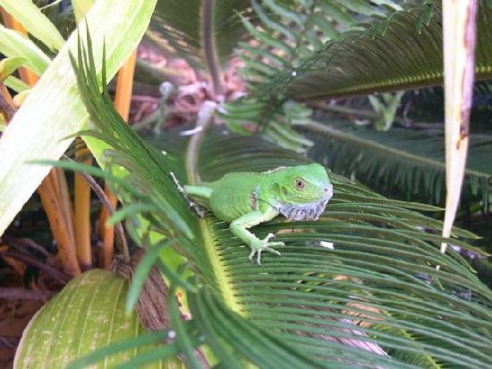 Costa Rica: Costa Verde - Manuel Antonio