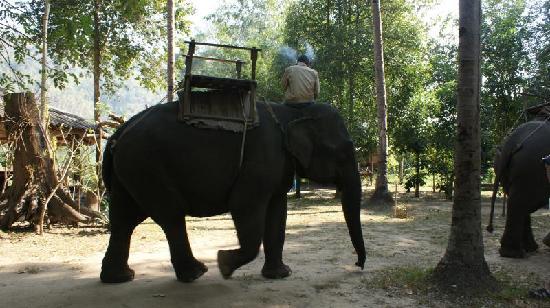 Kanchanaburi, Thaïlande : Elephant Trekking