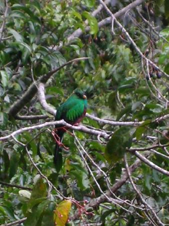 Costa Rica: Quetzal dans le jardin