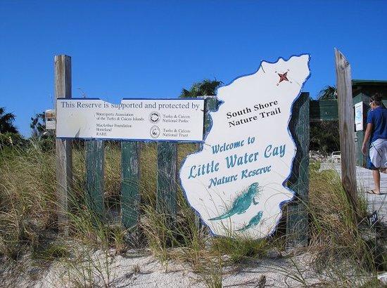 Iguana Sanctuary on Little Water Cay!