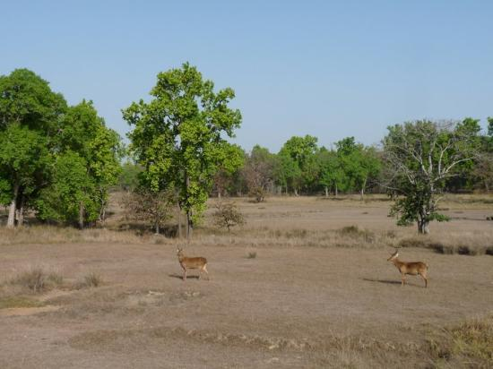 Kanha National Park Photos