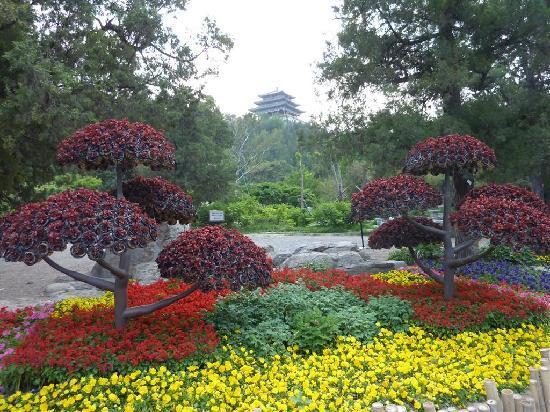 Photos of Jingshan Park (Yingshan Gongyuan), Beijing