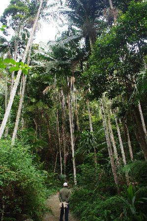 Photos of Tamborine Rainforest Skywalk, North Tamborine