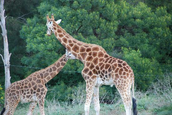 Photos of Werribee Open Range Zoo, Melbourne