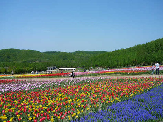 Photo of Takino Suzuran Hillside National Park
