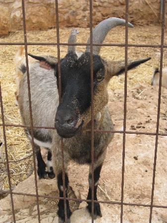 Image of: Trapped Pafos Zoo Depressed Animals Tripadvisor Depressed Animals Picture Of Pafos Zoo Paphos Tripadvisor