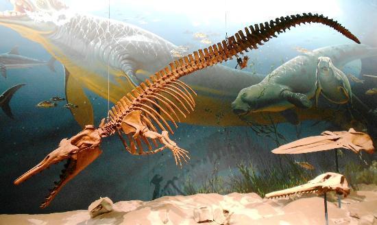 Basilosaurus Fossil Picture Of Smithsonian National