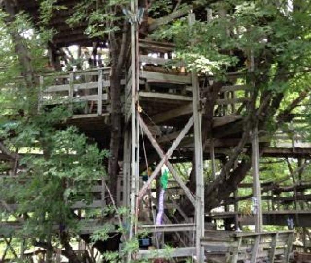 Big Treehouse