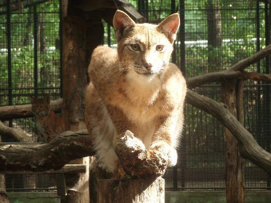 Debrecen Zoo Hungary Address Phone Number Reviews