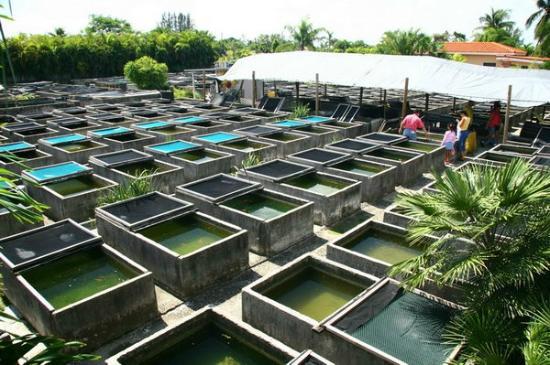 Aquatic Pond Supplies