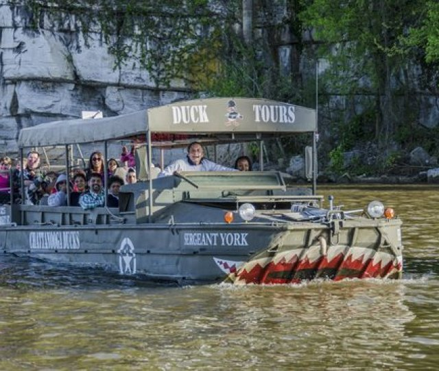 Chattanooga Ducks  All You Need To Know Before You Go With Photos Tripadvisor