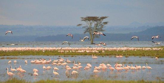 Image result for NATURU lake kenya