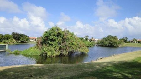 Golfclub Cocotal   Picture of Cocotal Golf   Country Club  Punta     Cocotal Golf   Country Club  Golfclub Cocotal