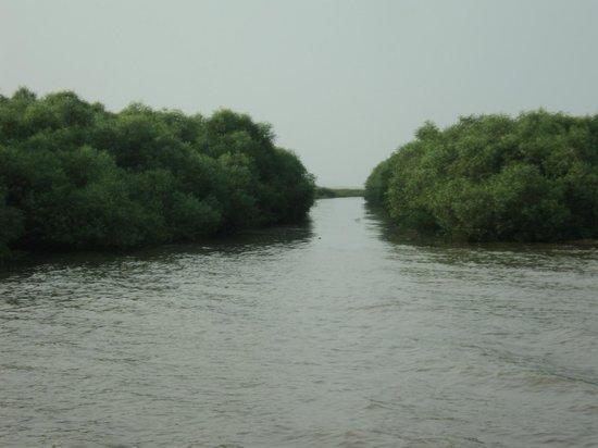 https://i2.wp.com/media-cdn.tripadvisor.com/media/photo-s/05/ef/7a/0c/coringa-wildlife-sanctuary.jpg