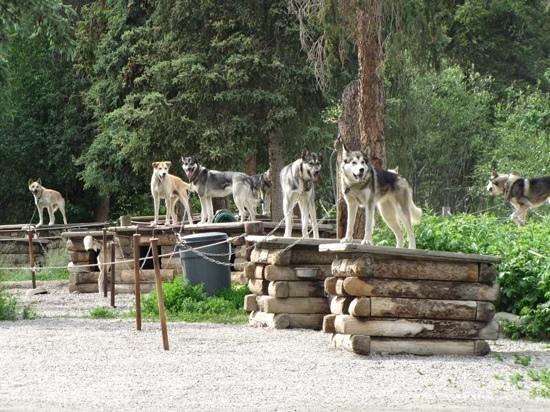 Puppy National Park Cam Denali