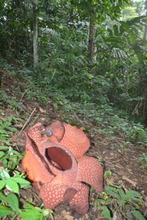 Bukit Barisan Selatan National Park (Tanggamus) - 2018 All ...