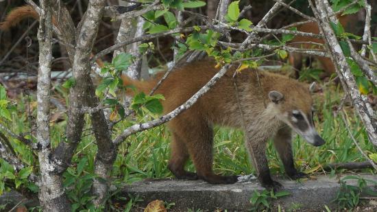 Wildlife Picture Of Grand Sirenis Riviera Maya Resort