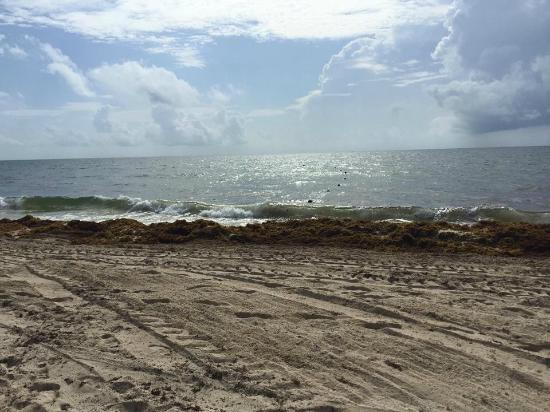 Seaweed On The Shoreline A Problem Throughout Mexico
