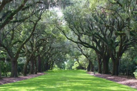 Peaceful - Reviews, Photos - Charles Towne Landing State Historic Site -  Tripadvisor
