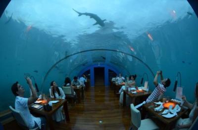 Ithaa underwater restaurant - Picture of Conrad Maldives ...