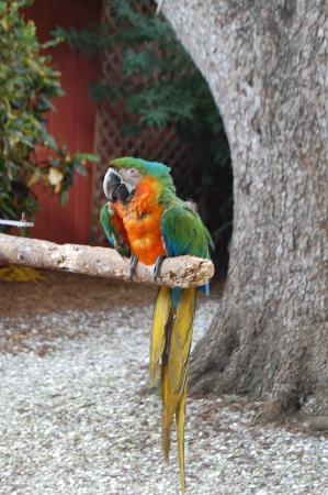 Home Decor Accessories » Sarasota Jungle Gardens