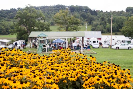 Maryland State Flower Black Eyed Susan In Full Bloom Picture Of Double G Rv Park Mchenry Tripadvisor