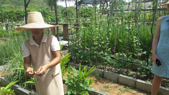 island organics thai cooking class the organic herb garden
