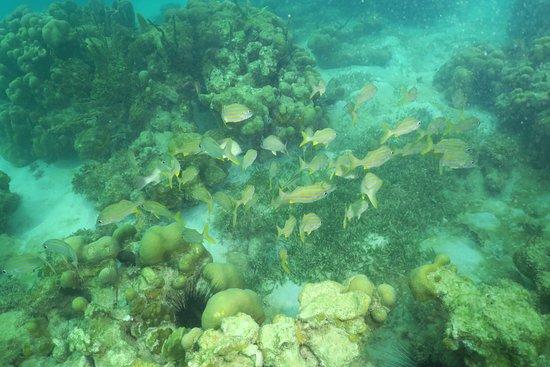 Le Fond Marin Photo De Plonge Immersion Caraibes Le