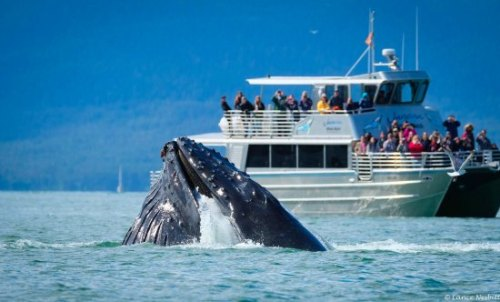 Image result for Go Whale Watching in Juneau
