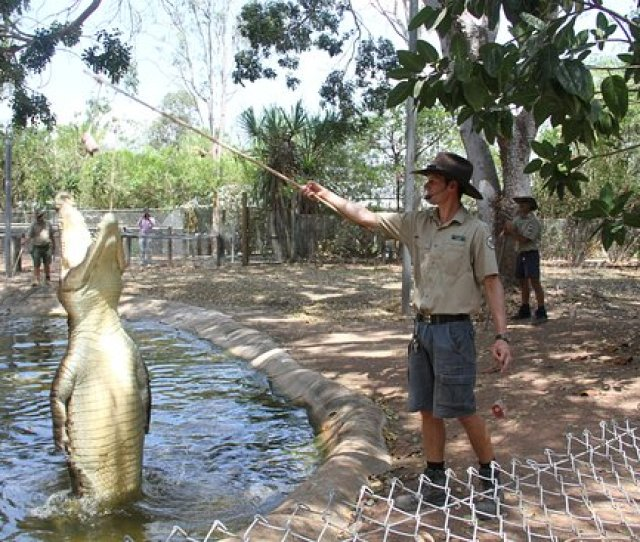 Billabong Sanctuary Alligatorenshow