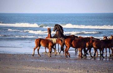 Wild Horse Adventure Tours (Corolla): AGGIORNATO 2020 - tutto quello che c'è da sapere - Tripadvisor