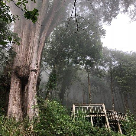 棲蘭神木園 (大同) - 旅遊景點評論 - TripAdvisor