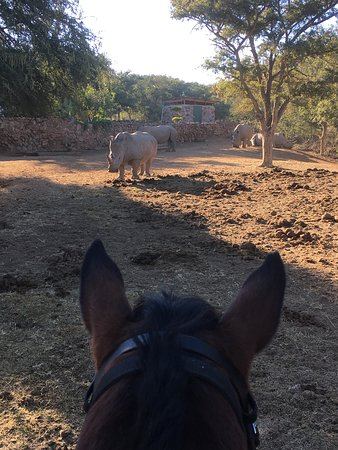 Family Safari South Africa Game Lodges Child Friendly Holidays Ant S Nest And Hill Bush Homes