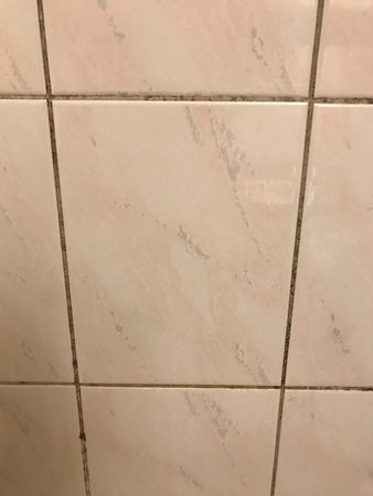 black mold in tile grout picture of