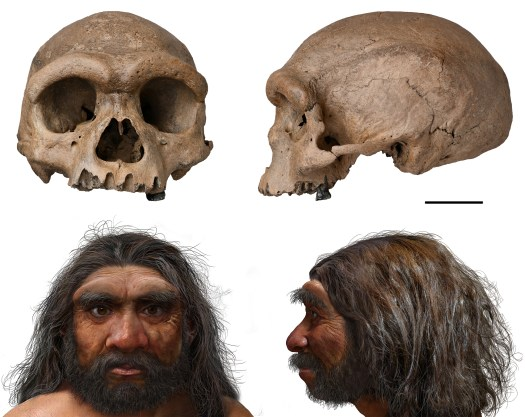Discovery of 'Dragon Man' skull in China prompts rethink of human evolution 2