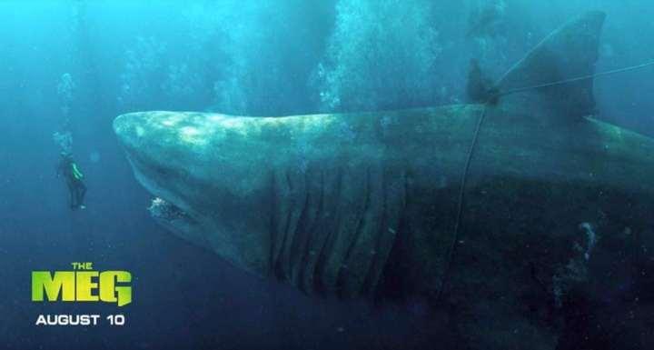 The-Meg-Banner